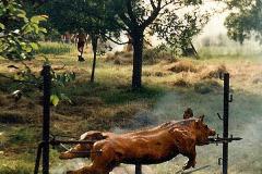 1997 - Čuník